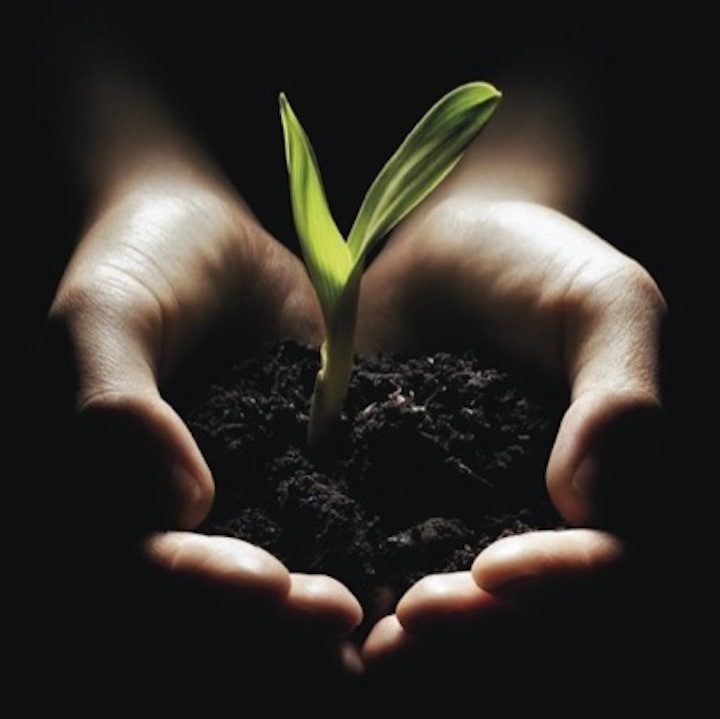 4 Plant in Hands